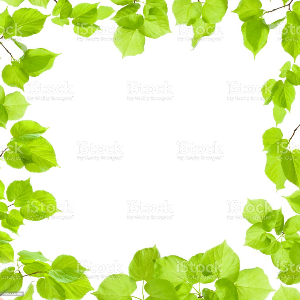 Green leaves frame isolated on white, border and background stock photo