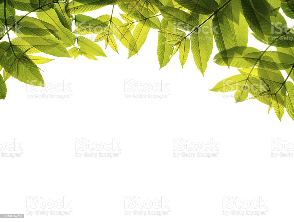 Green leaves frame, isolated on white. stock photo