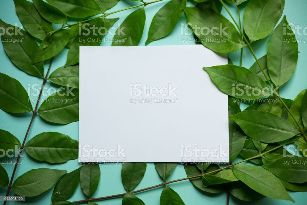 Green leaves frame on blue background stock photo