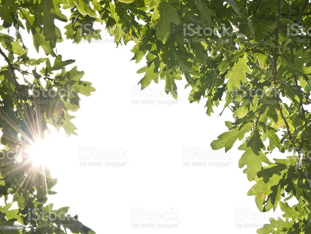 Green leaves frame royalty-free stock photo