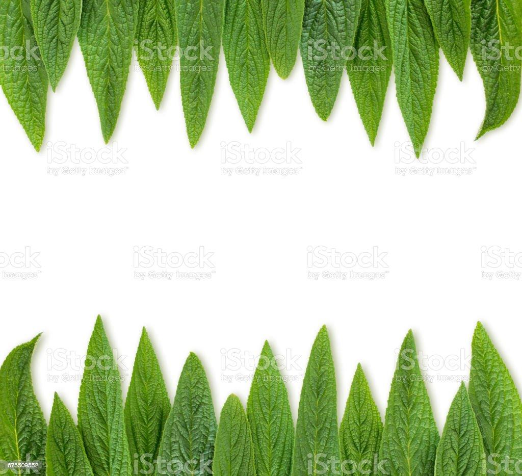 Cadre de feuilles vertes  photo libre de droits
