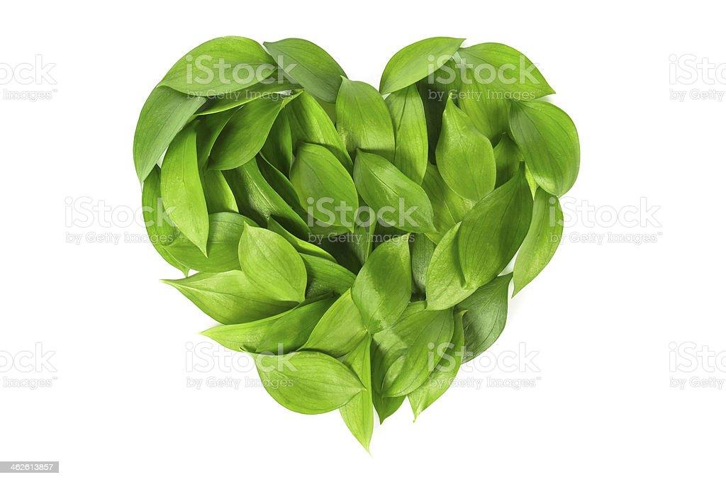 Grüne Blätter Herzen – Foto