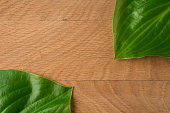 Green Leaves, Roadway Hosts, Shot Close-up Against Wooden Board Background