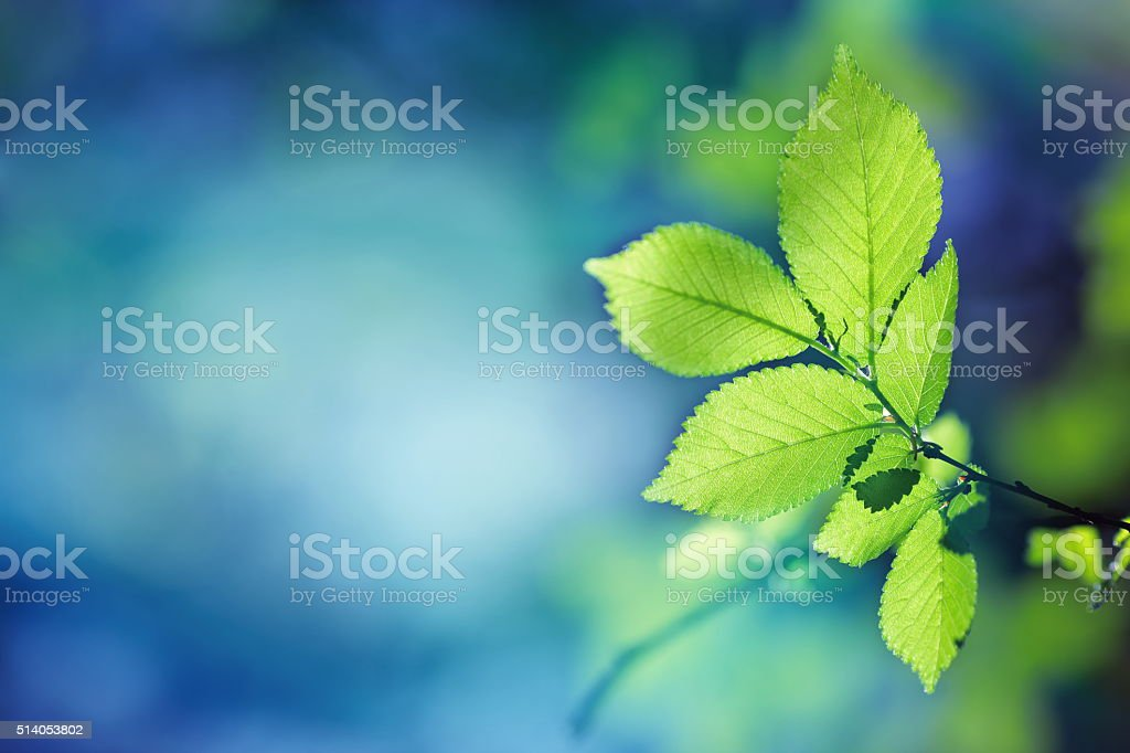 Green Leaves in a Forest stock photo