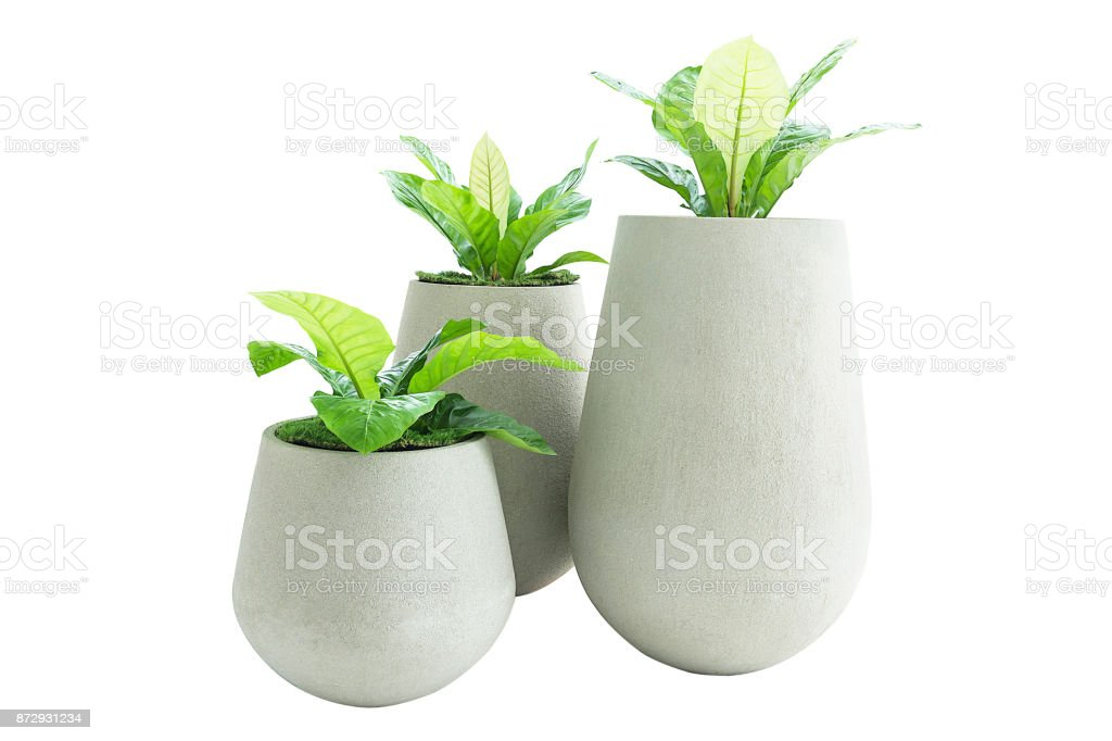 Green Leaves In Concrete Pot Isolated On White Background stock photo