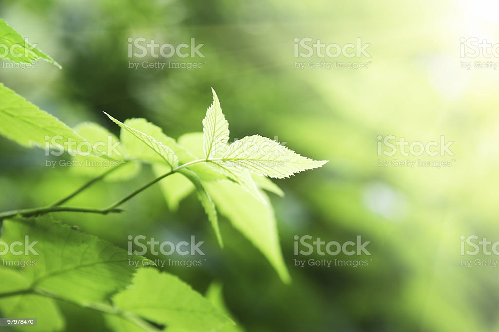 green leaves in deep forest royalty-free stock photo