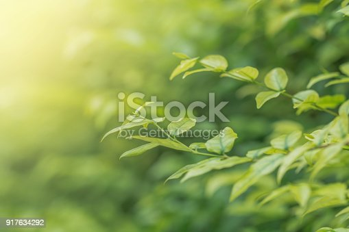 Green Leaves in summer day, Soft Focus