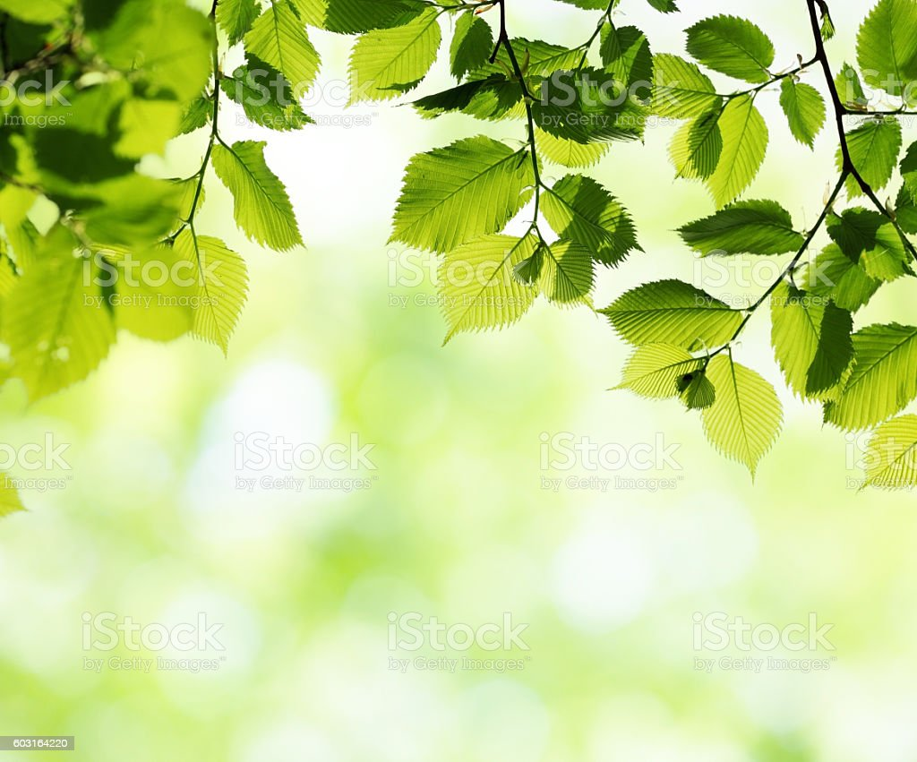 Green leaves in sunny spring day. Natural background stock photo