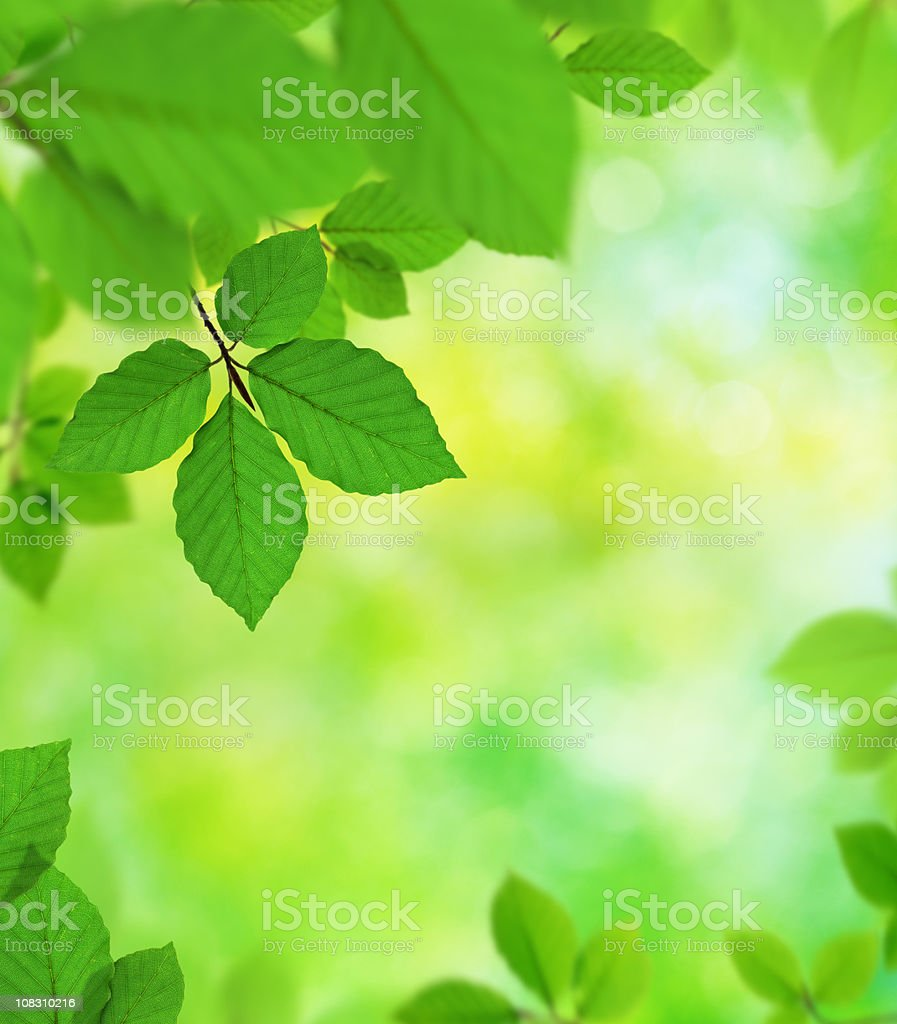 Green Leaves In The Forest royalty-free stock photo