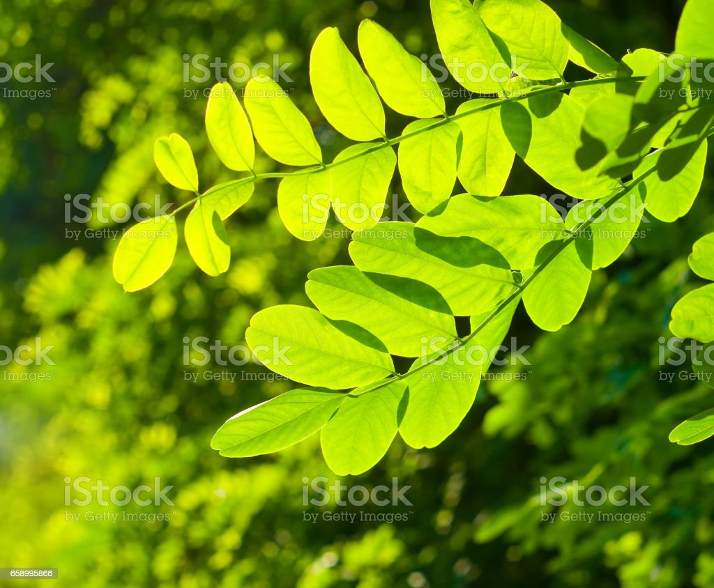 Green leaves in the garden royalty-free stock photo