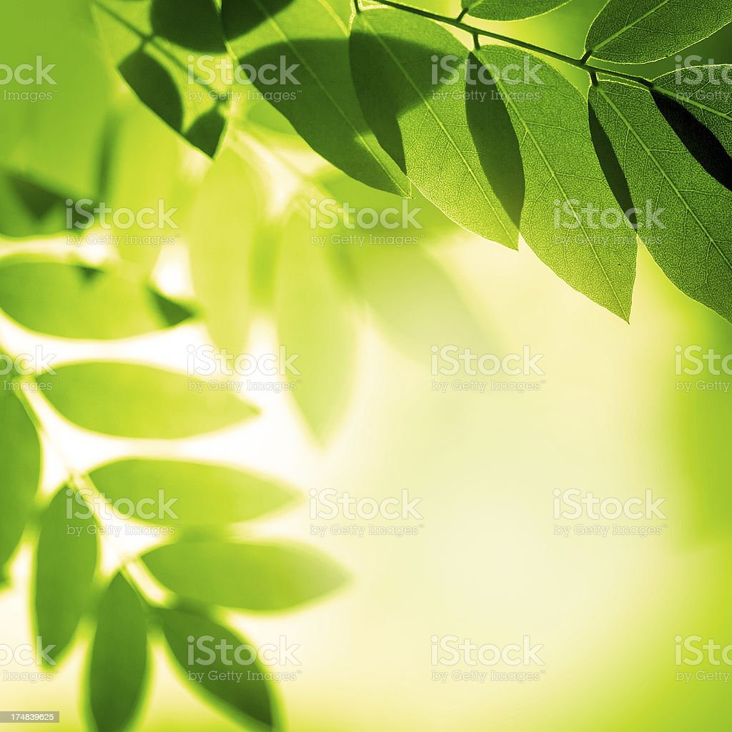 Green leaves in the nature royalty-free stock photo