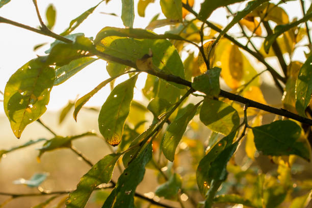 Green leaves in yellow light stock photo