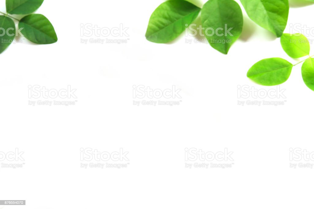 Green leaves isolate on white background. stock photo