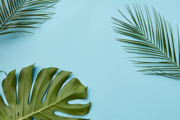 feuilles vertes isolé  - motif tropical photos et images de collection