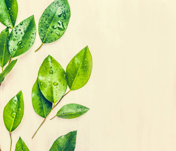 Green leaves layout Green leaves, top view tea crop stock pictures, royalty-free photos & images