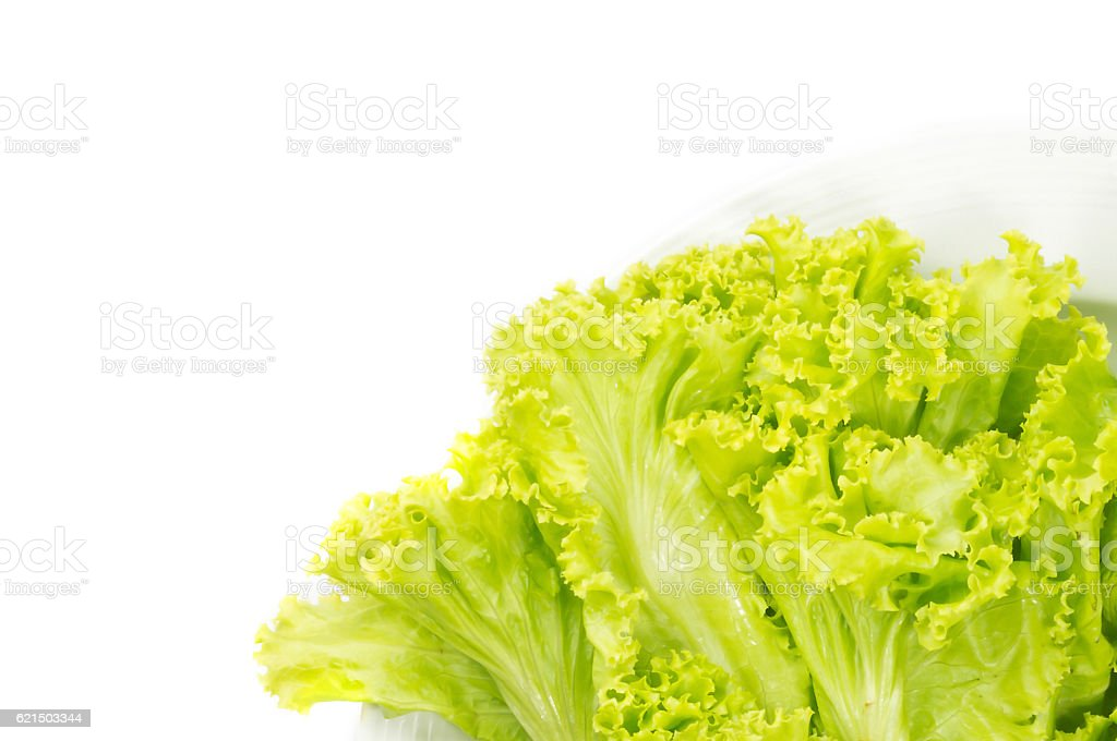 Grüne Blätter Salat Lizenzfreies stock-foto
