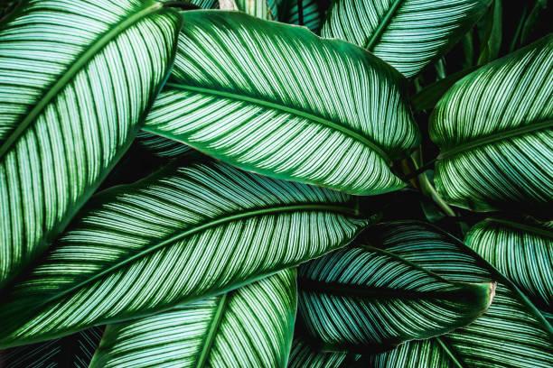 綠葉自然背景 - 熱帶式樣 個照片及圖片檔