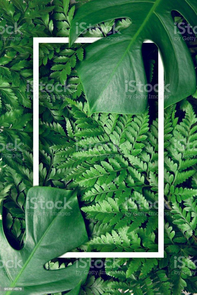 Fotografía de Fondo De Naturaleza De Hojas De Color Verde Con Diseño ...