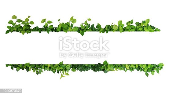 istock Green leaves nature frame border of devil's ivy or golden pothos the tropical foliage plant on white background. 1040873370
