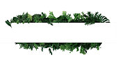 istock Green leaves nature frame layout of tropical plants bush  (ferns, climbing bird's nest fern, philodendrons, Monstera) foliage floral arrangement on white background with clipping path. 1205134012