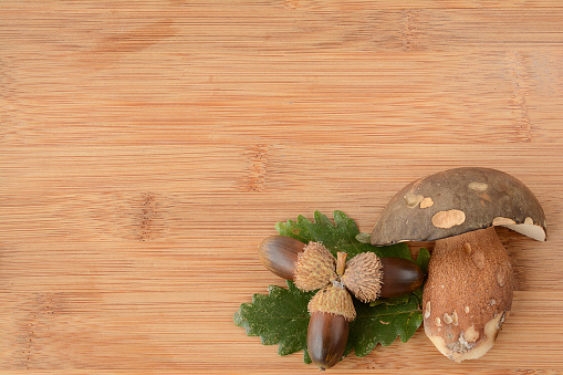 istock Green leaves, oak nuts and porcini 500969666