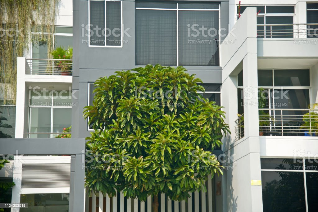 Green leaves of a tree with a modern building stock photo