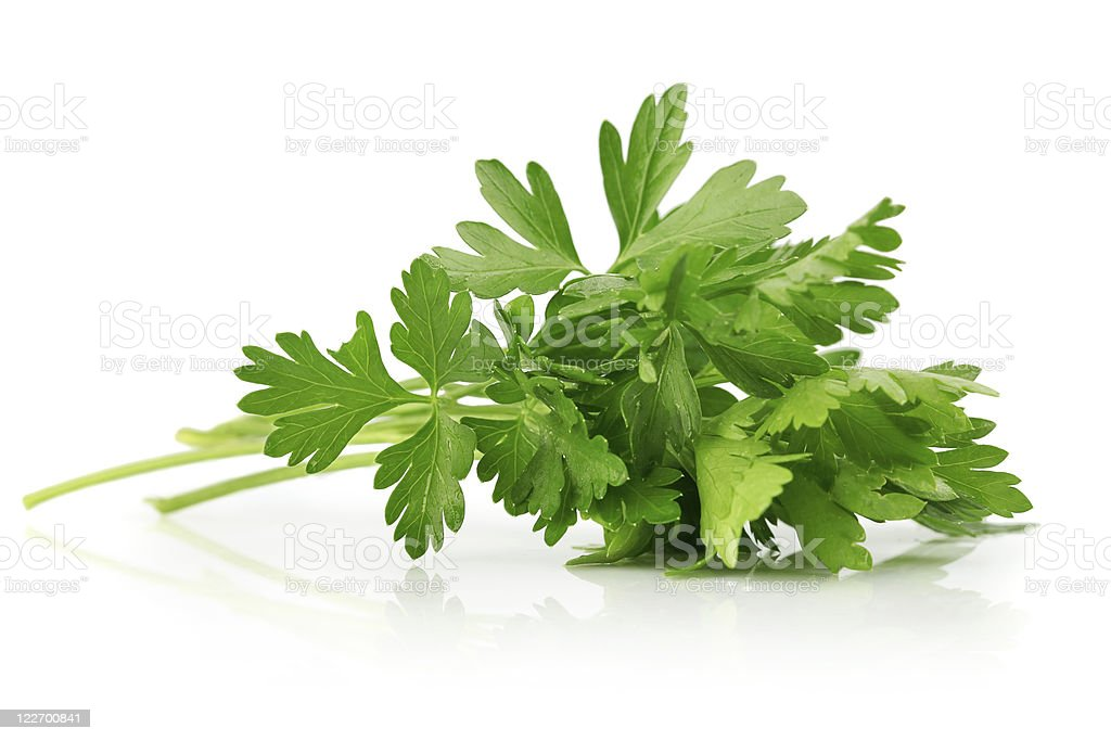 green leaves of parsley stock photo