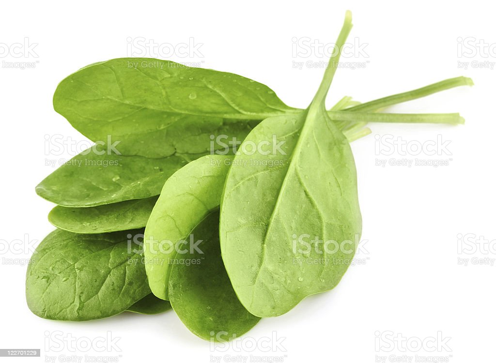 green leaves of spinach stock photo
