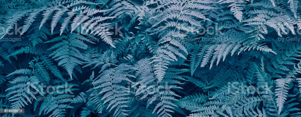 Green leaves of the fern stock photo