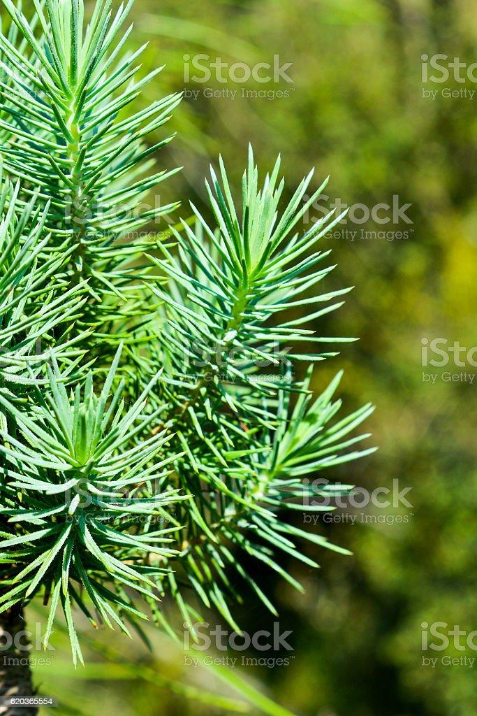 Green leaves of the spring zbiór zdjęć royalty-free