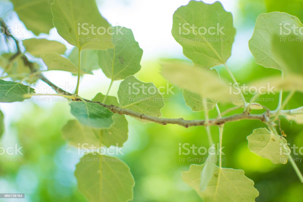 Green leaves of trees. Environmentally friendly background. - Royalty-free Abstract Stock Photo