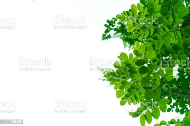 Green leaves on a white background space for writing blur and picture id1222268055?b=1&k=6&m=1222268055&s=612x612&h=hmafderwmarvnjgwxkemkjw sokgzuaan ursylrque=