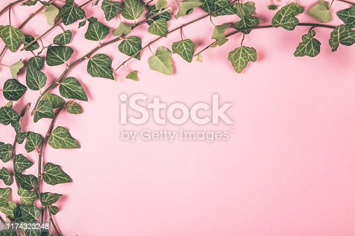 Composition of green leaves bunches on pink background. Flat lay style.