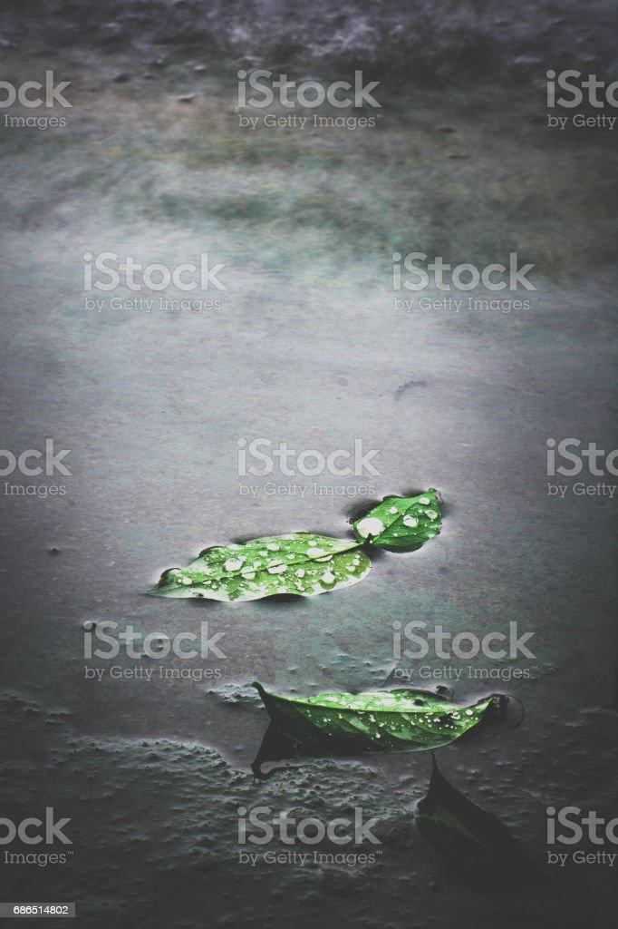 green leaves on black water zbiór zdjęć royalty-free