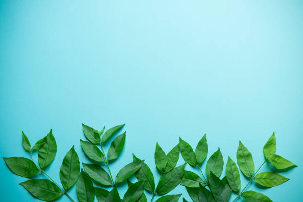 Green leaves on blue background stock photo