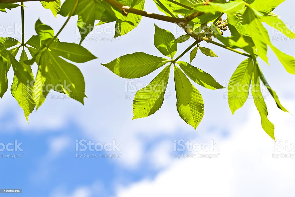 green leaves on blue sky royalty-free stock photo