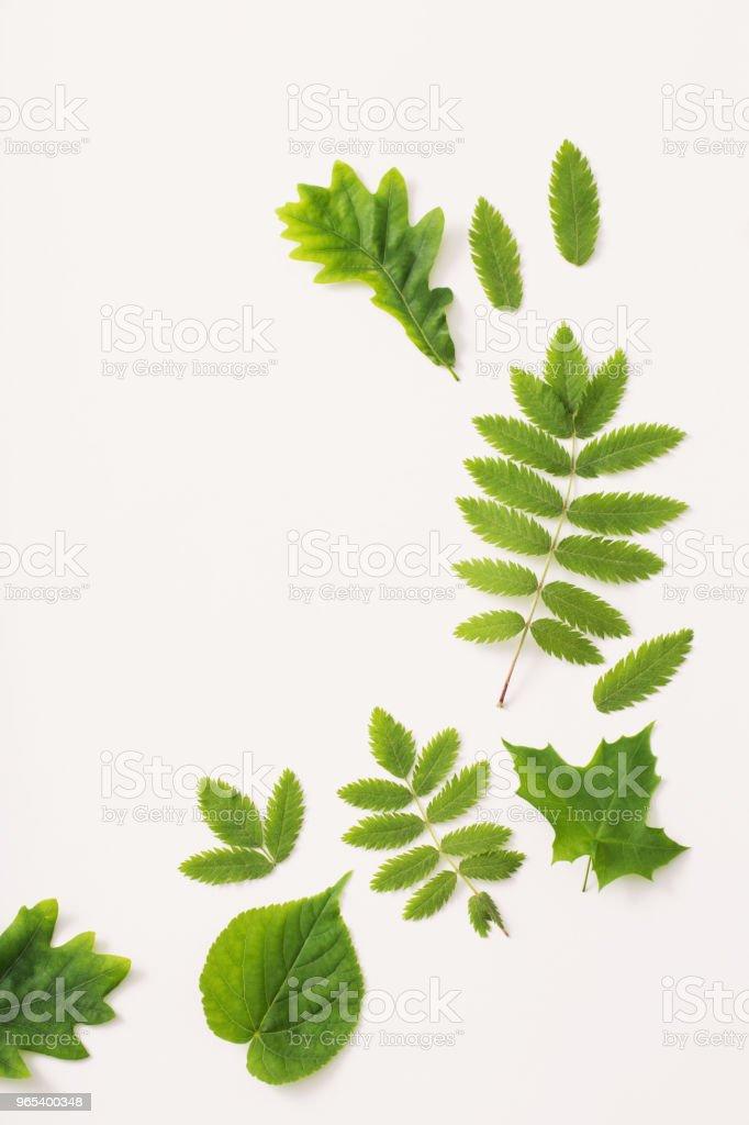 grüne Blätter auf Papierhintergrund - Lizenzfrei Ahorn Stock-Foto