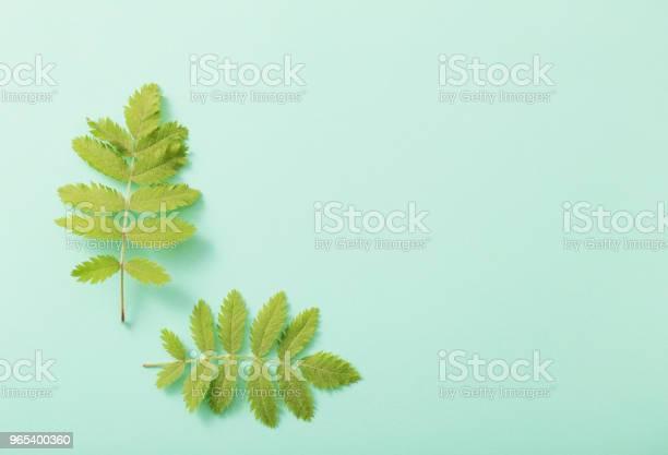 종이 바탕에 녹색 잎 0명에 대한 스톡 사진 및 기타 이미지