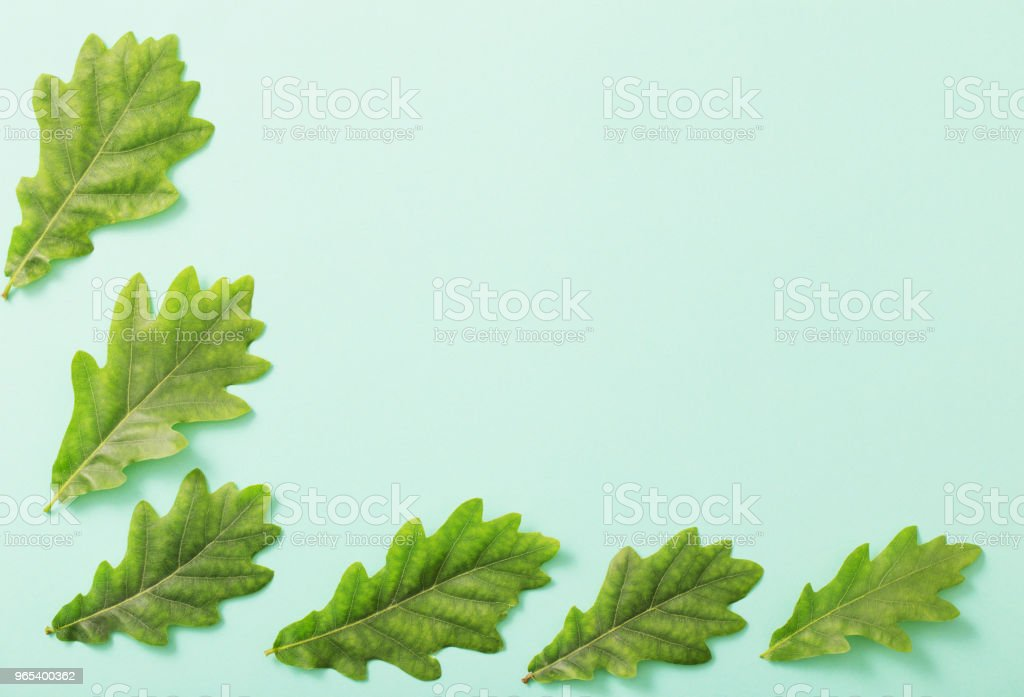 green leaves on paper background zbiór zdjęć royalty-free
