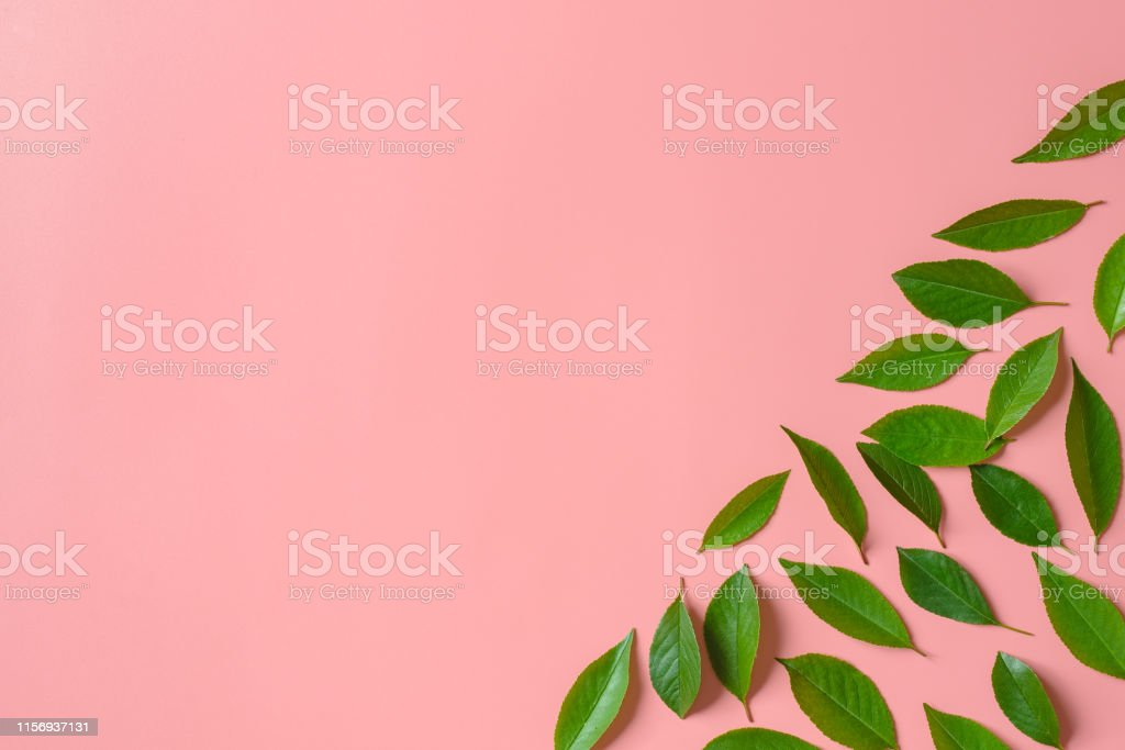 Green leaves on pink background. Flat lay. Minimal nature concept