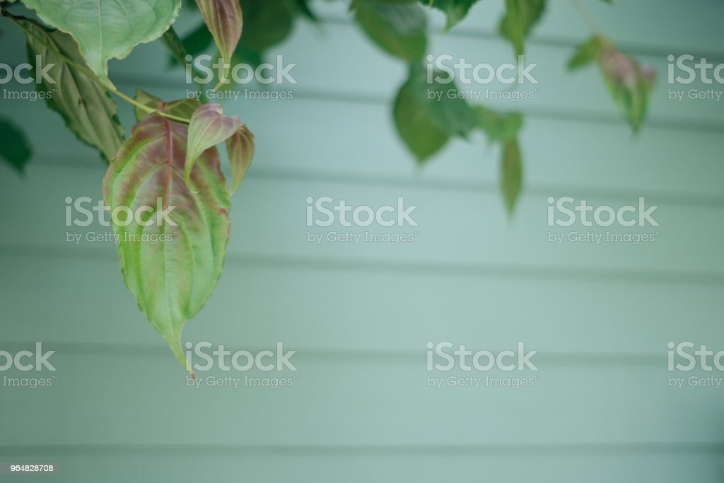 green leaves on the green backgrounds royalty-free stock photo