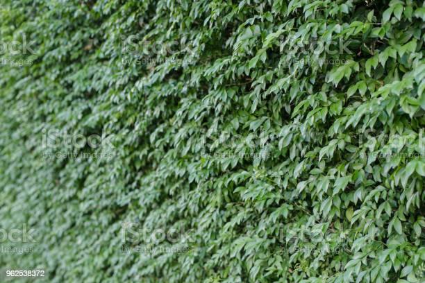 Foto de Folhas Verdes Em Fundo De Parede e mais fotos de stock de Abstrato