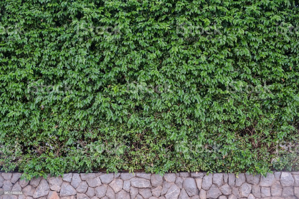 Green leaves on wall background. - Royalty-free Abstract Stock Photo