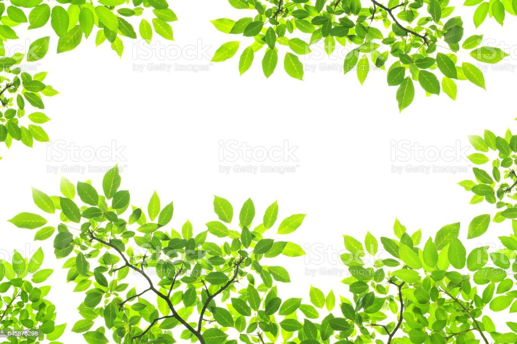 Green Leaves On White Background stock photo