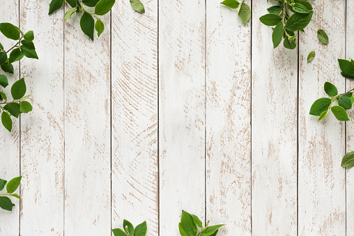 Old white wooden background with green leaves, top view, copy space. Spring twigs on shabby background, frame, flat lay.