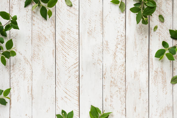 Green leaves on white Old white wooden background with green leaves, top view, copy space. Spring twigs on shabby background, frame, flat lay. table top view stock pictures, royalty-free photos & images