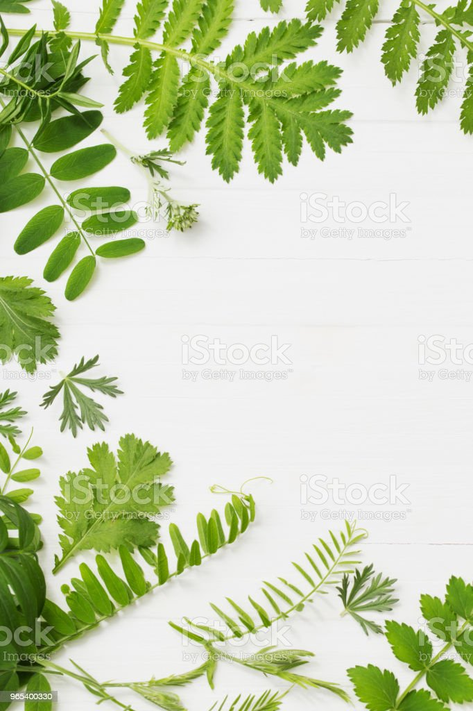 green leaves on white wooden background royalty-free stock photo