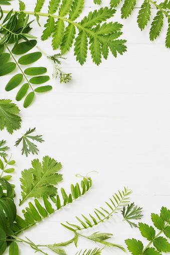 흰색 나무 배경 녹색 잎 0명에 대한 스톡 사진 및 기타 이미지