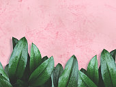 green leaves over pink painted wall