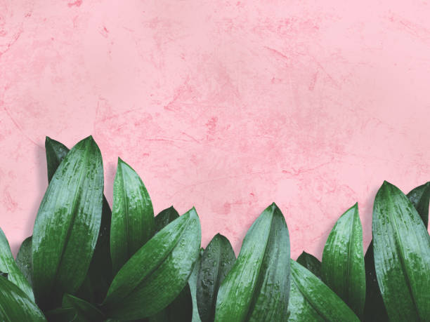 green leaves over pink painted wall stock photo